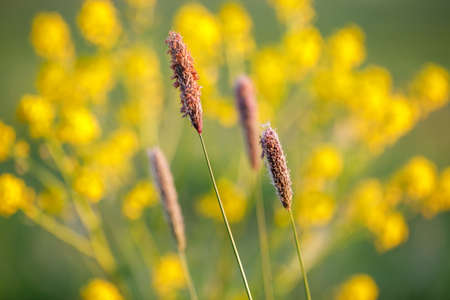 grass on meadow, shallow focus, spring natural color tone background Stock Photo