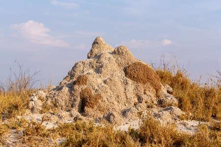 termite mound in Africa, Etosha national park Namibia Stock Photo