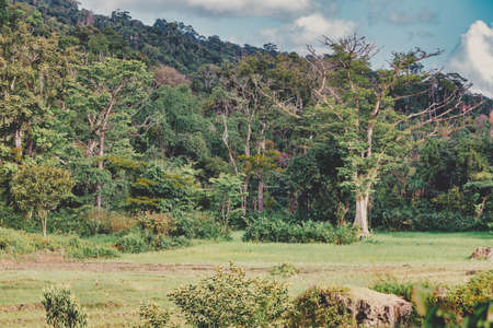pure nature landscape, Masoala National Park, rainforrest in mist, Madagascar wilderness nature scene. 免版税图像
