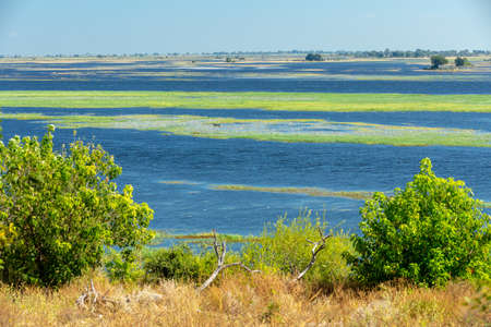 picturesque landscape of Chobe river in Botswana. Africa wilderness