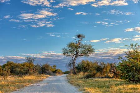 beautiful landscape of Moremi game reserve with road, Okavango Delta, Botswana, Africa wilderness Stock fotó