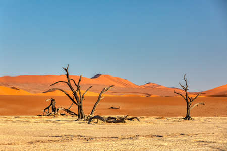 morning panorama of hidden Dead Vlei landscape with dry acacia in Namib desert, dead acacia tree in valley Sossusvlei Namibia wilderness Stockfoto - 130069158