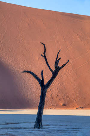 beautiful morning colors and dead acacia in hidden Dead Vlei landscape in Namib desert, dead acacia tree in valley Sossusvlei Namibia wilderness Stockfoto - 130069162