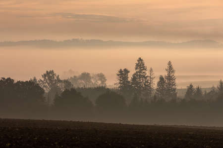 fall misty and foggy landscape with a tree silhouette on a fog at sunrise, Vysocina Czech Republic Stock Photo