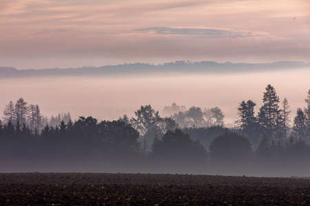 fall misty and foggy landscape with a tree silhouette on a fog at sunrise, Puklice Vysocina Czech Republic