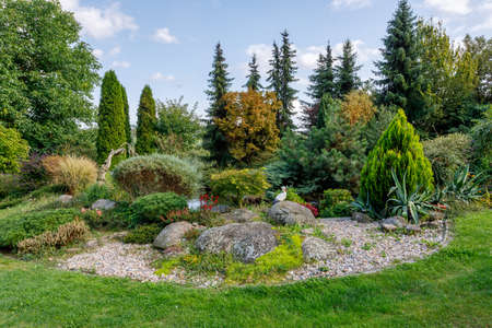 Beautiful fall garden, with evergreen conifer trees. Autumn gardening concept