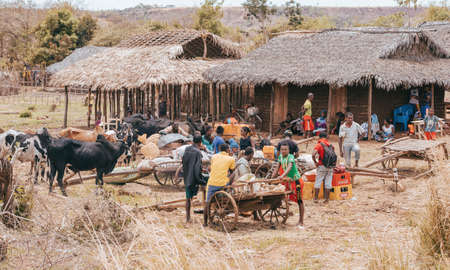 SOFIA ,MADAGASCAR NOVEMBER 4.2016 Malagasy peoples on farm in rural Sofia city. Daily people life on countryside. Madagascar, November 4. 2016 Editorial