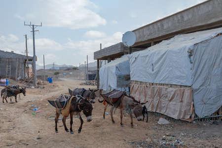 Hard working donkey in small Afar muslim village in Afar Triangle region. Road to Danakil depression. Ethiopia
