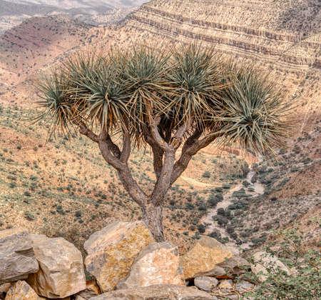 Beautiful highland landscape with valley. Afar region near city Mekelle. Ethiopia, Africa wilderness
