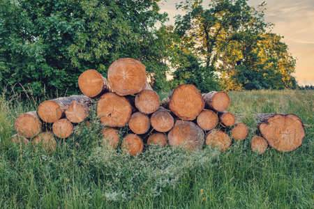 Piled logs of harvested wood timber next to forest. Czech Republic Bark beetle attack calamity deforestation, European landscape