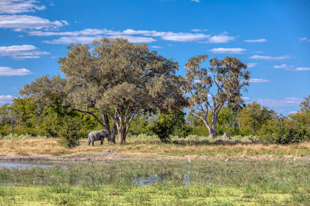 herd of African Elephant on waterhole in Moremi game reserve Botswana, picturesque of traditional landscape, Africa safari wildlife
