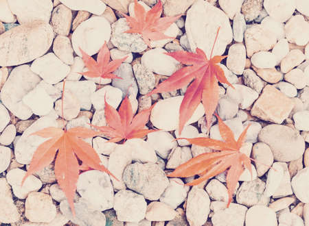composition of fall autumn Leaves over pebbles background