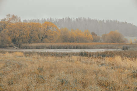 The cool autumn morning at the drained pond, misty landscape, Jihlava Vysocina, Czech Republic Europe