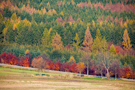 view of a colorful deciduous forest in autumn with multicolored yellow, orange, red and green foliage on the trees in a scenic full frame view of the changing seasons