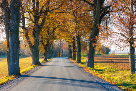 fall colored alley with colorful trees. Fall autumn season natural background