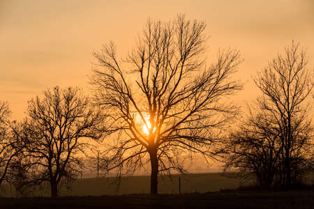 sunset over silhouette of tree, fall season. Fall landscape, tree without leaves. Czech Republic, Europe