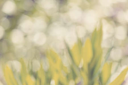 blurry natural background with shallow focus and bokeh, wallpaper or backdrop use. Spring background. Spring Backdrop. Natural background, Natural wallpaper. Spring wallpaper