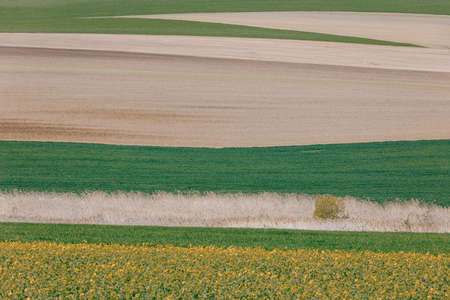 Beautiful spring rural landscape with plowed field curves and wheat grain. Rural landscape. Spring landscape. Beautiful countryside curve. Rural background. Abstract color curves