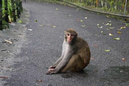 Monkey Sitting in India Stock Photo