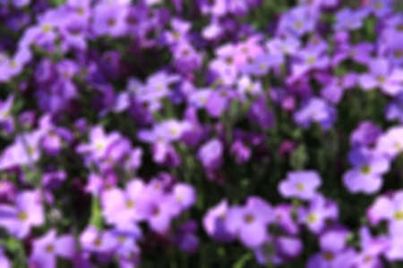 petites fleurs: blurred background of spring small flowers lilac Banque d'images