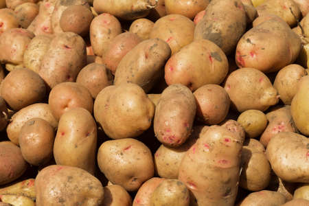 soiled: abstract background of different potato soiled ground