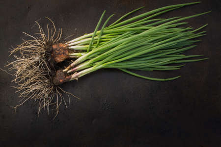 blackout: fresh green onions with roots scattered on a dark grunge metal background. Blackout photos.