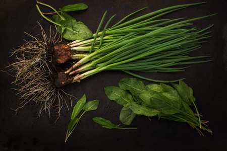 blackout: fresh green onions with root and sorrel scattered on a dark grunge metal background. Blackout photos.