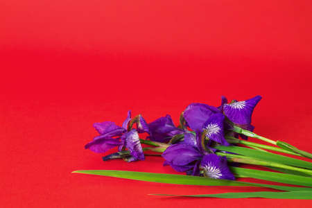 textural: bouquet of purple iris flowers on red textural background