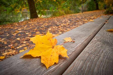 Park in Fürth, Germany during autumn season