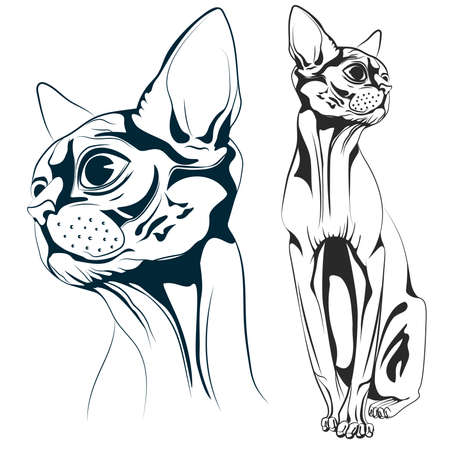 kitty cat: Monochrome bald cat, a set of two objects the head of a cat and the cat entirely. Vector illustrations