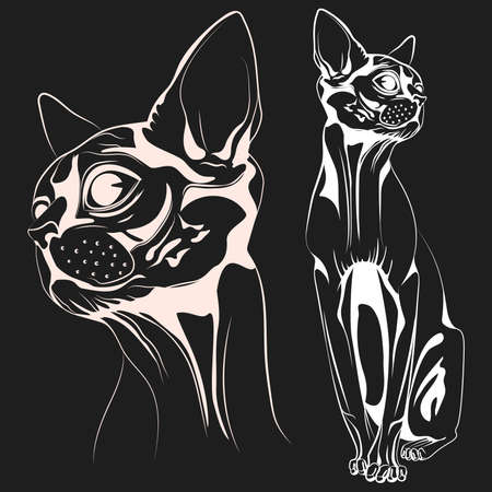 two objects: Monochrome bald cat, a set of two objects the head of a cat and the cat entirely. Vector illustrations