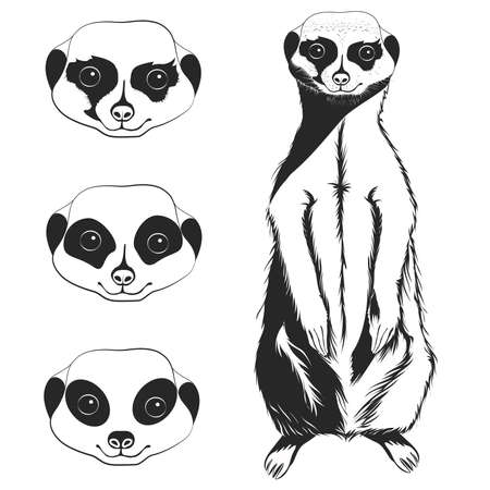 mongoose: Set of monochrome meerkat full-length and 3 variants faces. Vector illustration
