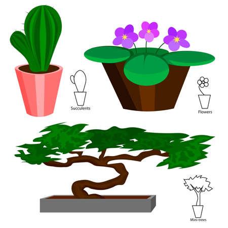 house plants: Set of colored house plants in pots cactus, violet and bonsai. Vector illustration