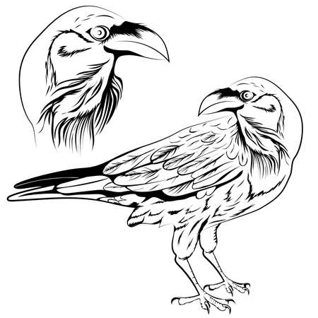 Black and white raven, a set of two objects a head and a bird. Vector illustration