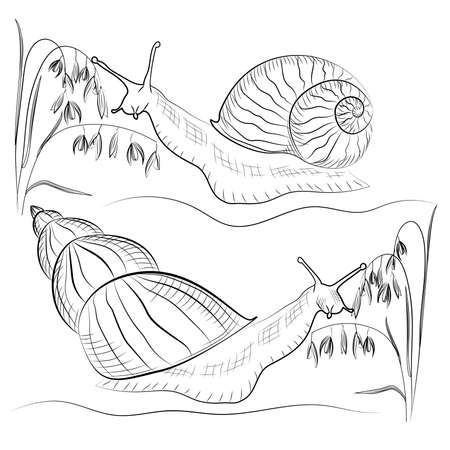 grass plot: Vector black and white snail with a blade of grass drawn in a linear plot. Vector illustration Illustration