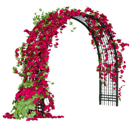 climbing plant: Metal grid that shaped as an arc with flowers on it pergola Stock Photo