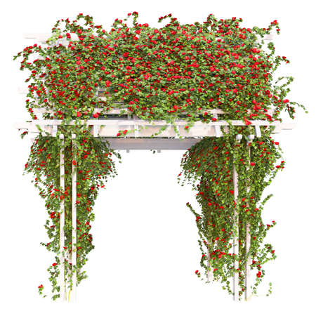 frondage: Pergola overgrown with red roses with green leaves on a white background pergola