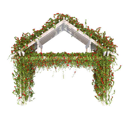pergola: Wooden pergola with white bushes of red roses. Climbing roses on a white background