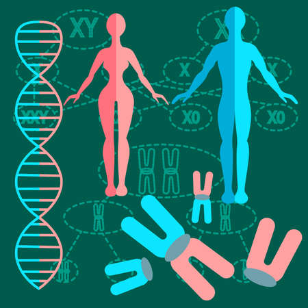 guanine: Set of people with genetics and DNA strands with two kinds of schemes of division of chromosomes. vector illustration