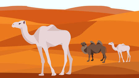 dunes: Camel in the desert sand hills, dunes, clear blue sky. Animals and nature. In flat polygon style for design applications and sites. Vector illustration Illustration