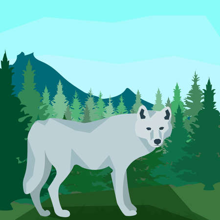 dense: Wolf on the hill in dense coniferous forest on the background of spruce, pine and mountain peaks, clear blue sky. Animals. In flat polygon style for design applications and sites. Vector illustration
