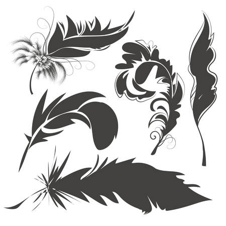 villi: Set of light, airy monochrome feathers with swirls. Grey in silhouette with beautiful curves. Vector illustration Illustration