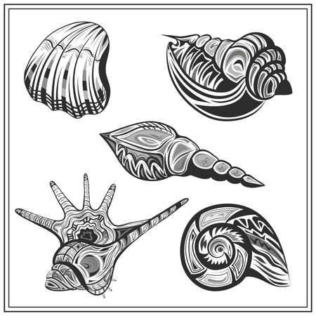 molluscs: Set of isolated ornamental molluscs shells. Decorative elements in black and white colors. Abstract image on a white background for design. Vector illustration Illustration