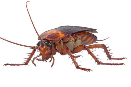 Cockroach bug brown and orange small pest. 3D rendering