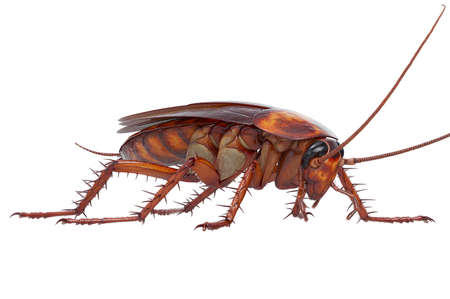 Cockroach bug small shiny pest. 3D rendering