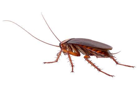 바퀴벌레 버그 곤충 작은 들어온다 생물. 3D 렌더링 스톡 콘텐츠