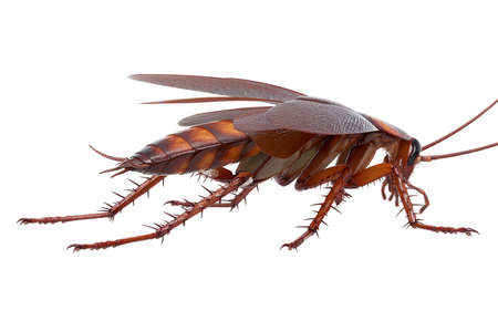 Cockroach bug american insect urban creature. 3D rendering Stock Photo