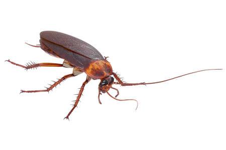 바퀴벌레 버그 곤충 오렌지 도시 바퀴벌레입니다. 3D 렌더링 스톡 콘텐츠