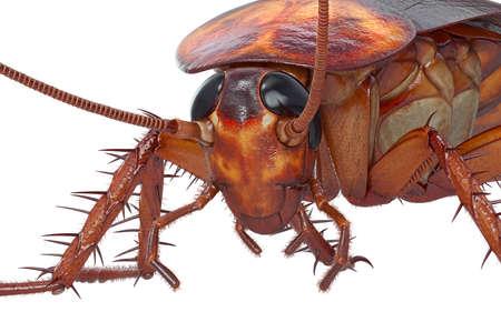 바퀴벌레 버그 갈색 바퀴벌레 작은 머리와보기를 닫습니다. 3D 렌더링 스톡 콘텐츠 - 84043912