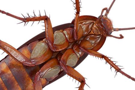 바퀴벌레 버그 작은 오렌지와 갈색 몸,보기를 닫습니다. 3D 렌더링 스톡 콘텐츠